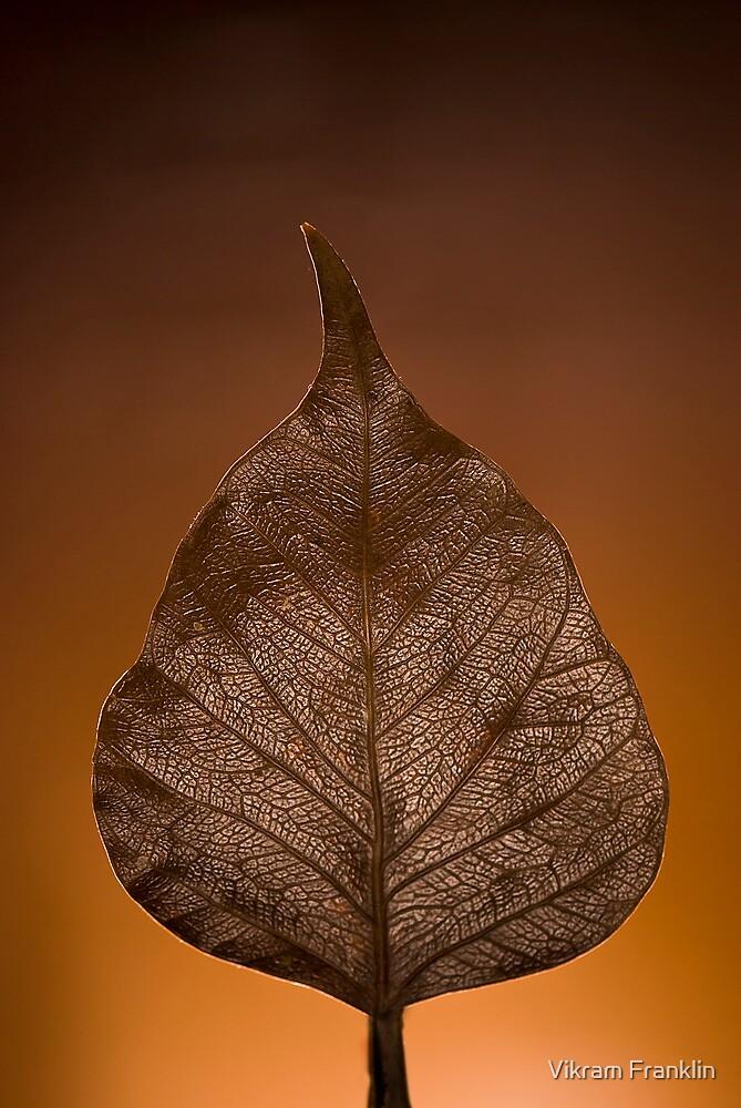 The Sacred Fig by Vikram Franklin