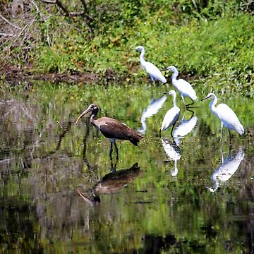 Egrets And Ibis by Cynthia48