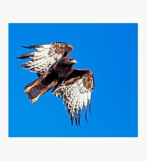 1108082 Rufous Morph Red Tailed Hawk Photographic Print
