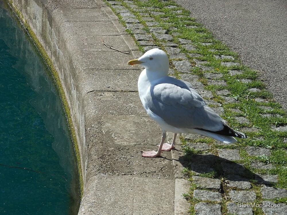 Soll ich oder soll ich nicht? Seagull Pondering von BlueMoonRose