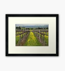 SA Vineyards Framed Print