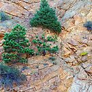 Rocky Mountain Canyon Wall  Trees and Color by Bo Insogna