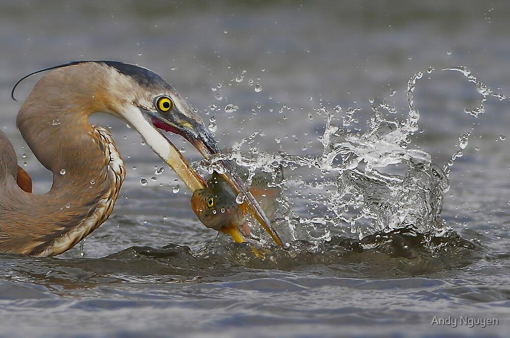 Caught in Action by Andy Nguyen