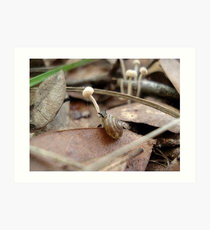 Snail in a Mushroom Jungle Art Print