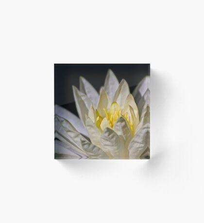 Sonnenbaden Seerose Acrylblock