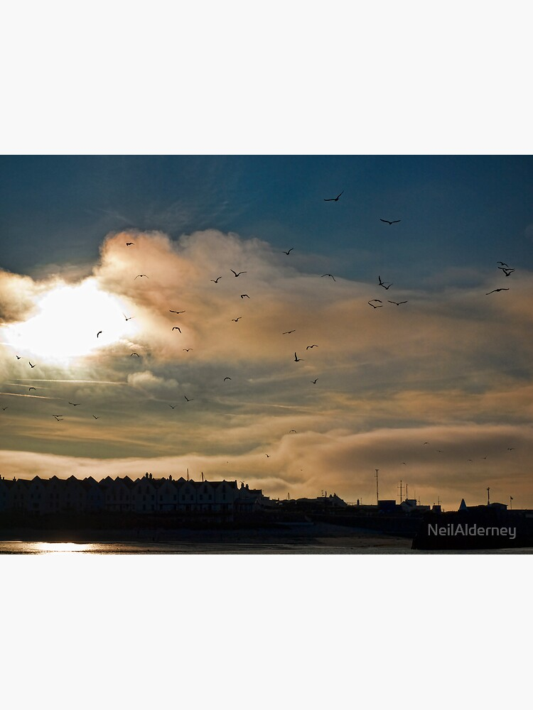 Flocking Seagulls!  by NeilAlderney