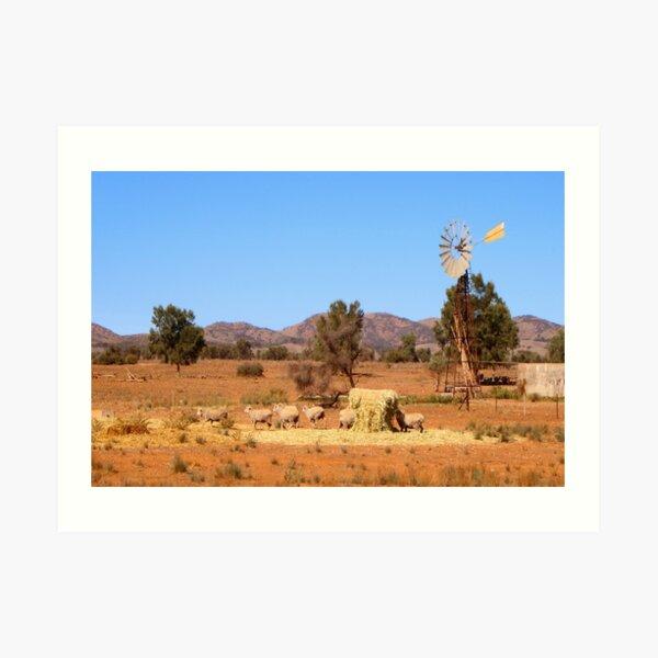 Sheep and windmill, Australia Art Print