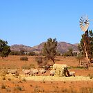 Sheep and windmill, Australia by FranWest