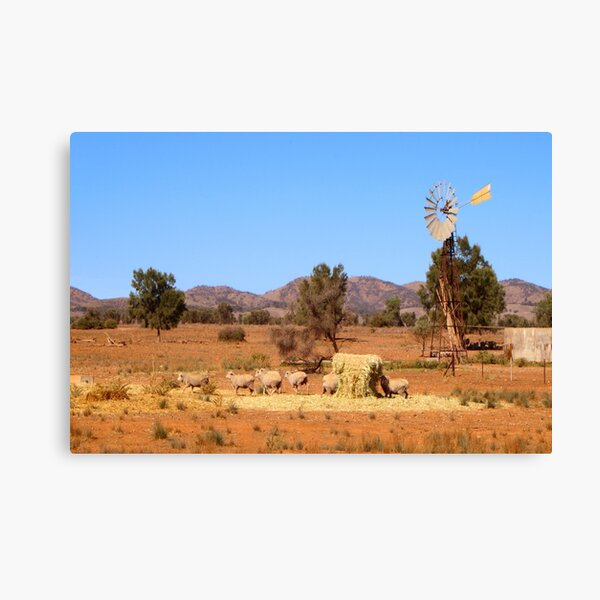 Sheep and windmill, Australia Canvas Print