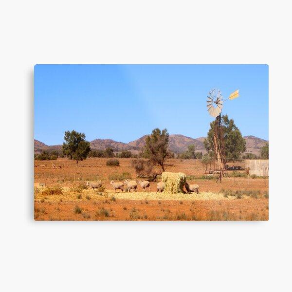 Sheep and windmill, Australia Metal Print
