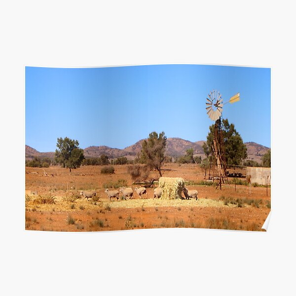 Sheep and windmill, Australia Poster