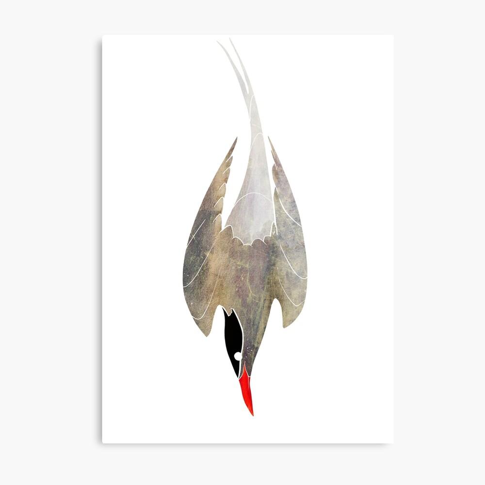 Arctic Tern Metal Print