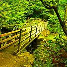 Foot Bridge - River Twiss by Trevor Kersley