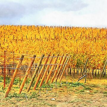 Grape Vines in Autumn by ShannathShima