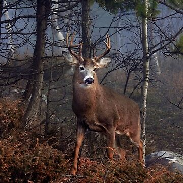 Buck on ridge - White-tailed Deer by darby8