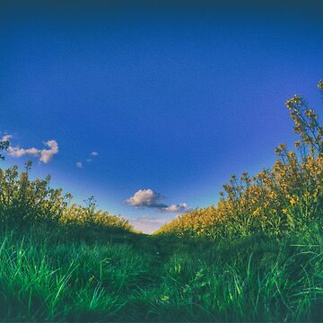 The Rapeseed Field and The Cloud by Nigdaw