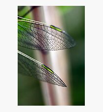 Variegated Meadowhawk, Immature Female, Wing Tips Photographic Print