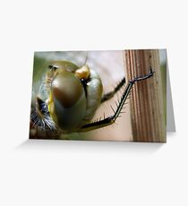 Variegated Meadowhawk, Immature Female, Close Crop of Eyes 2 Greeting Card