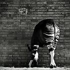 Okapi von Didi Bingham