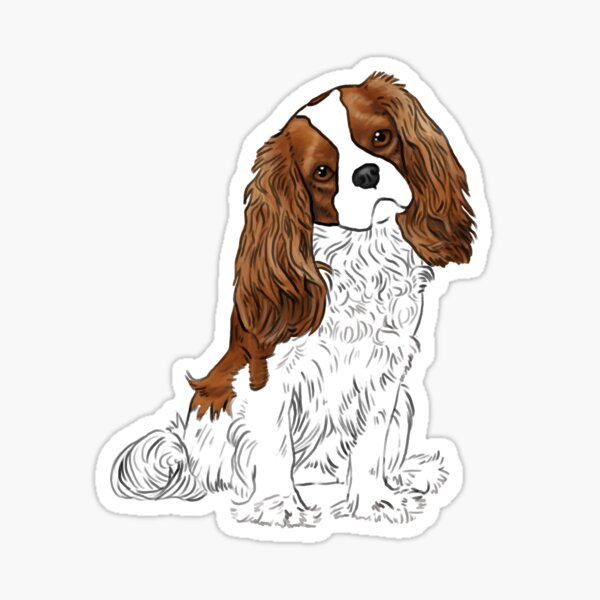 Cavalier King Charles Spaniel - Blenheim Sticker