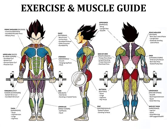 Exercise Muscle Guide Anatomy Chart Super Ss Posters By