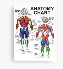 Exercise Muscle Guide - Anatomy Chart - Super SS Metal Print