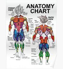 Póster Guía de ejercicios musculares - Tabla de anatomía - Súper SS