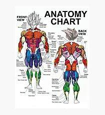 Exercise Muscle Guide - Anatomy Chart - Super SS Photographic Print