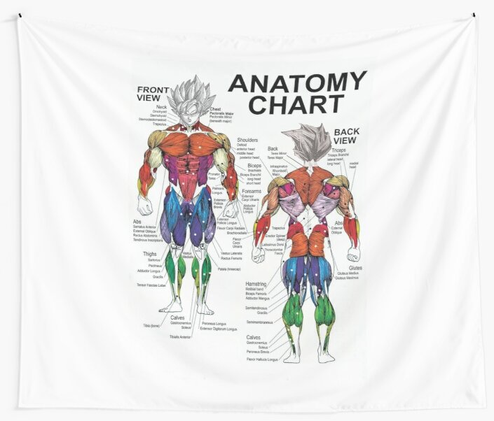 Exercise Muscle Guide Anatomy Chart Super Ss Wall Tapestries By