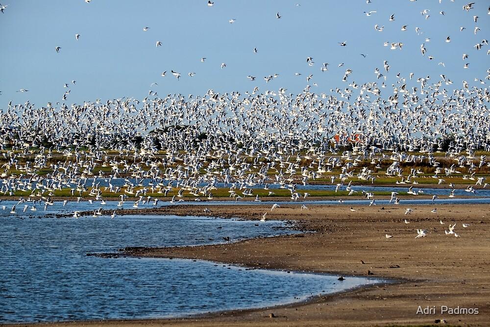 Birds birds birds.... by Adri  Padmos