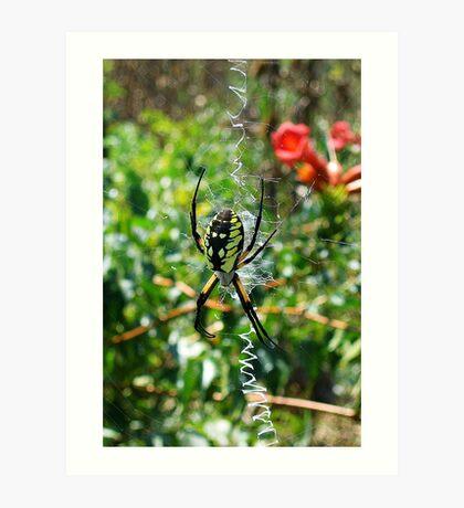 Sunbathing Garden Spider Art Print