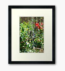 Sunbathing Garden Spider Framed Print