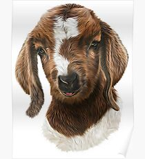 Portrait of a Goat  - Boer Goat Baby Nicklaus  Poster