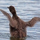 Learning The Ropes - Baby Common Loon by DigitallyStill