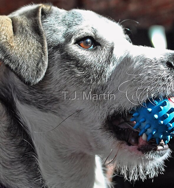 Playing Fetch With Emma by T.J. Martin