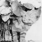 Kitten in the Flowers by Bryan Duddles