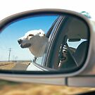 reflected joy by Michelle Fluri
