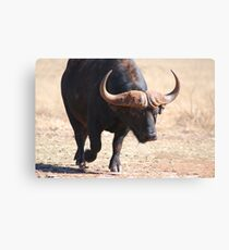 A Heavy Weight Canvas Print