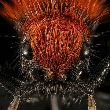 Close up of a red ant by franceslewis