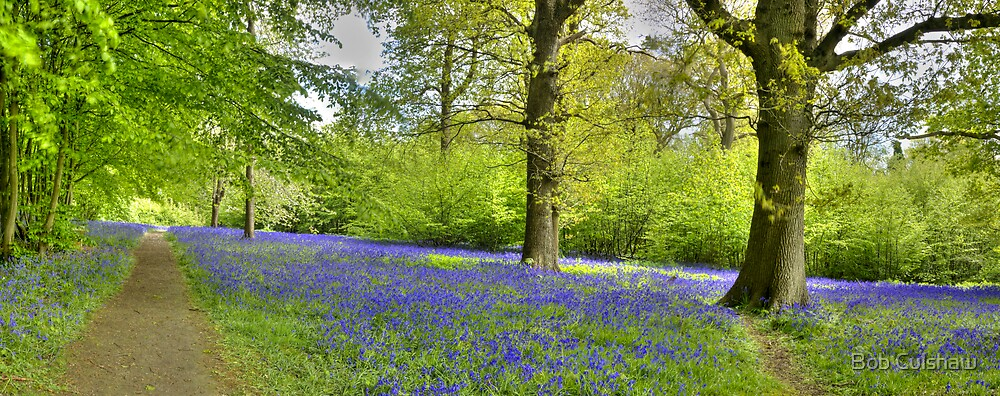 Walking with Bluebells by Bob Culshaw