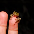 Sleepy Frog by MyFrogCroaked