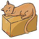 Sleeping Tabby Cat on Box by Kaity E.