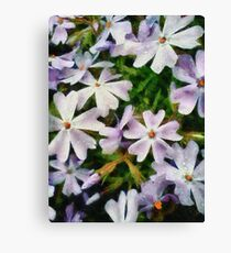 Small and Perfect Canvas Print
