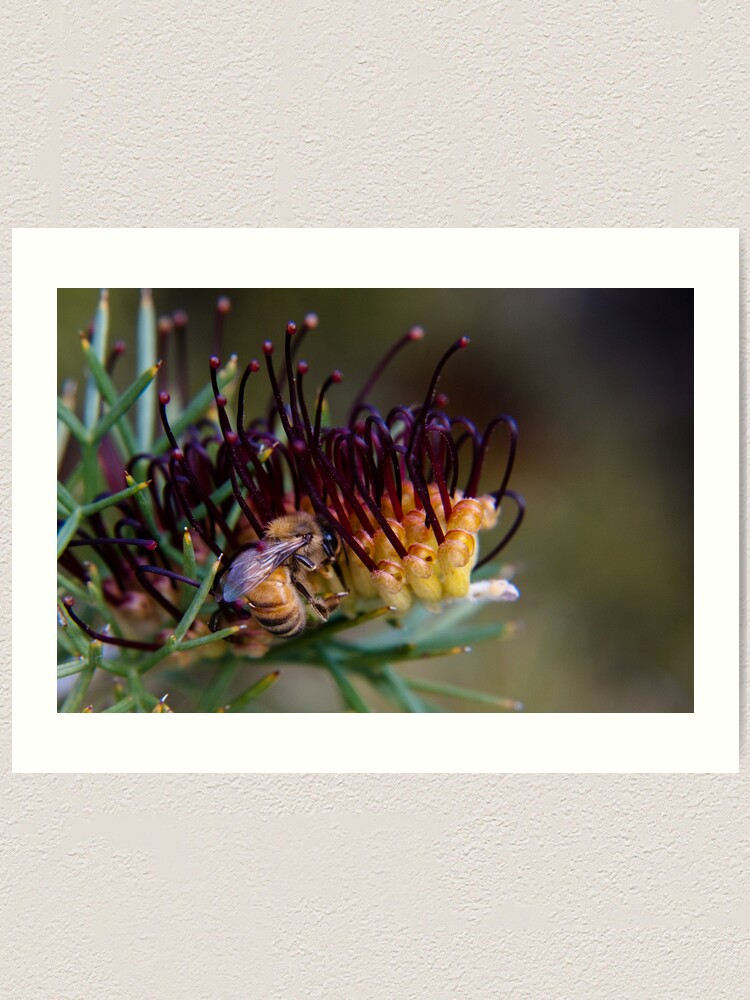 Alternate view of Bee on prikly toothbrushes Art Print