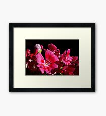 Pink never looked so good! Framed Print