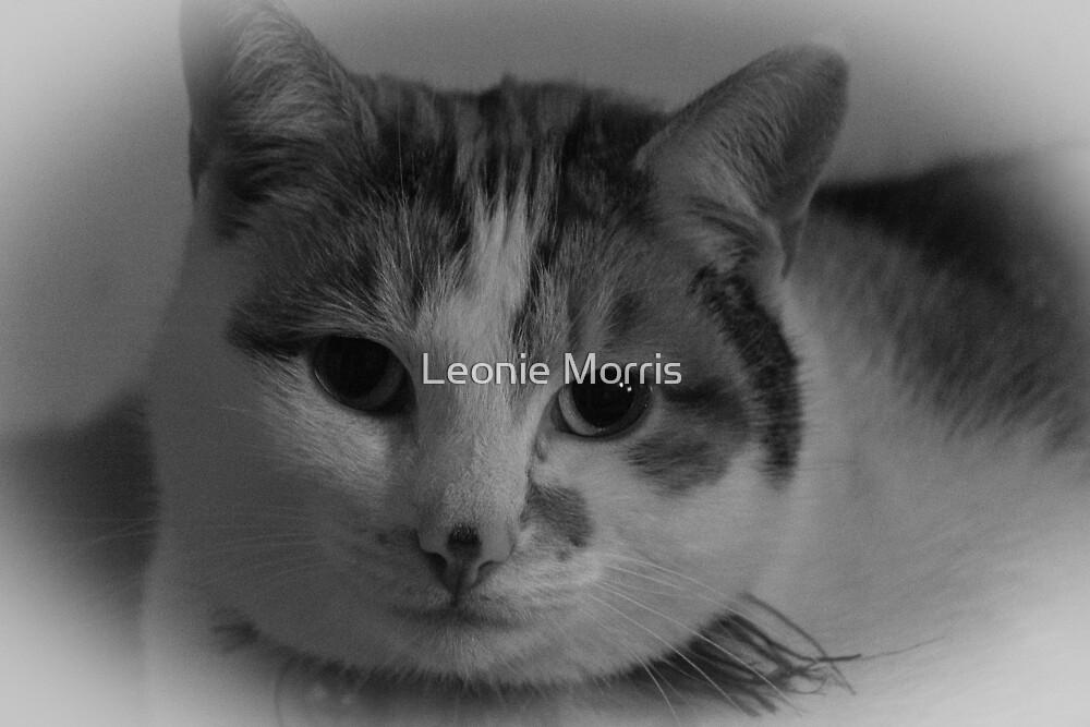 Black & White Cat by Leonie Morris