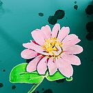 Dew drops upon the water colored petals of a delicate flower in a small humble garden.... by DDLeach
