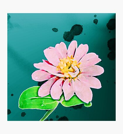 Dew drops upon the water colored petals of a delicate flower in a small humble garden.... Photographic Print