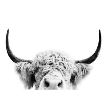 vaca de peckhc