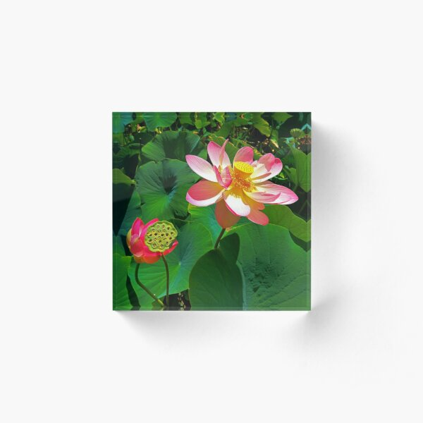 1840 Lotus field details Acrylic Block